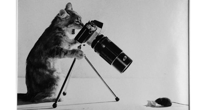 Bases et conseils pour la photographie débutant