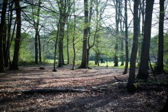 Balade en Forêt (3)